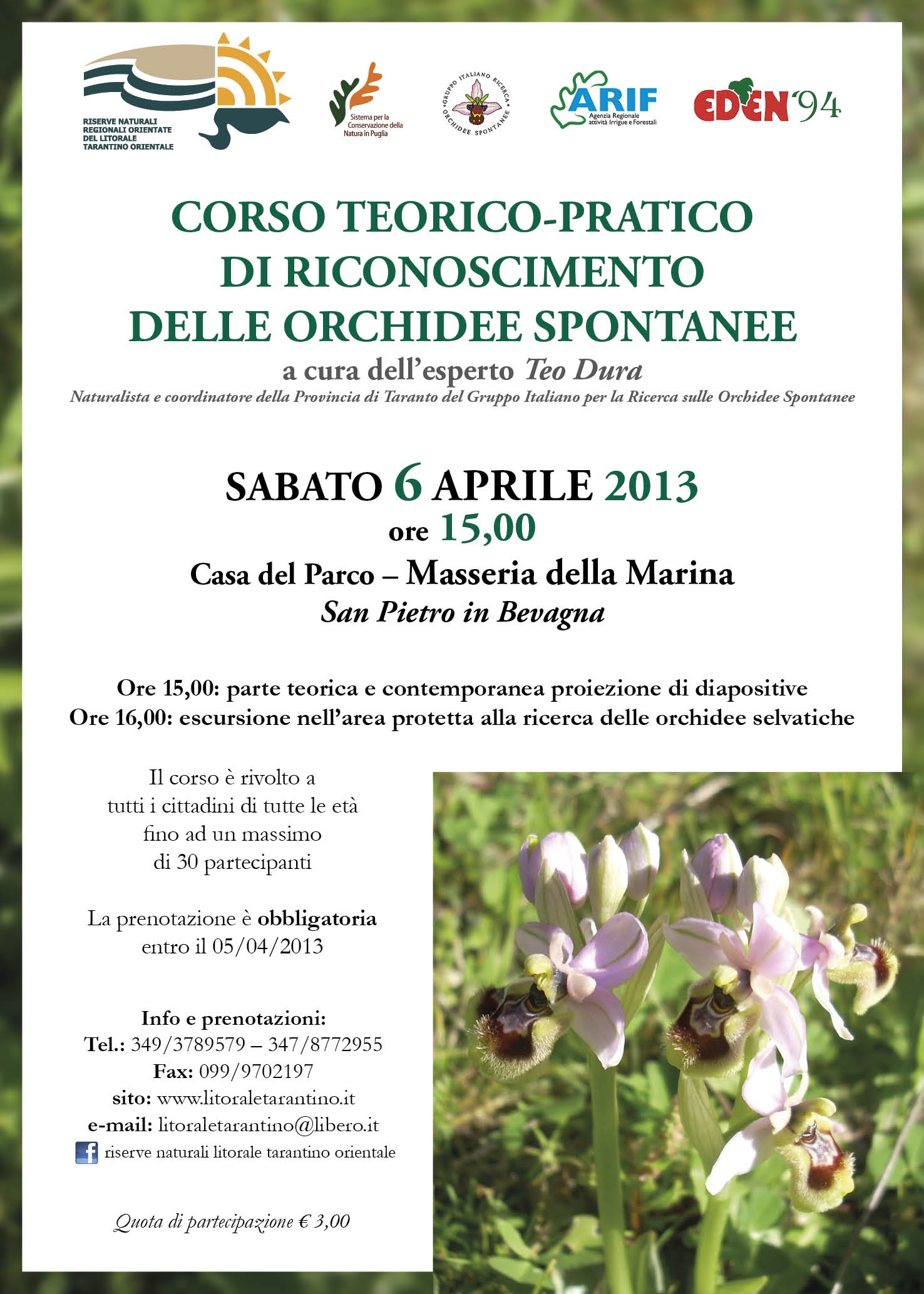 orchidee_web